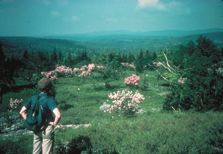A man looks out over a green meadow, dotted sparsely with pink blooming bushes.